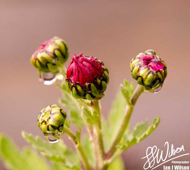Water Buds – Daily Photo (19th October 2012)