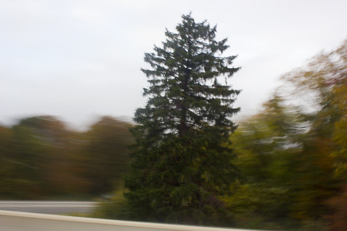 Tree Captured Around Motion