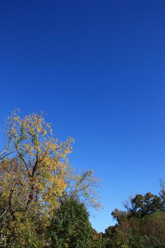 Carolina blue by aimeesblog