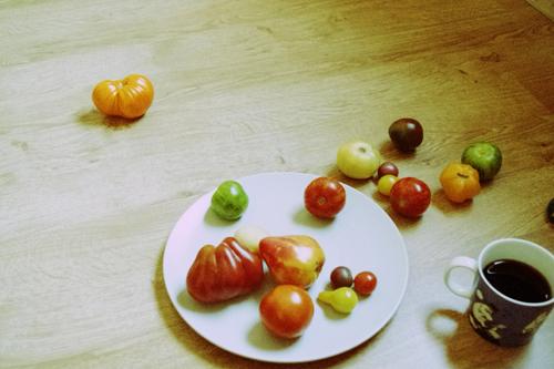 stilleben tomates