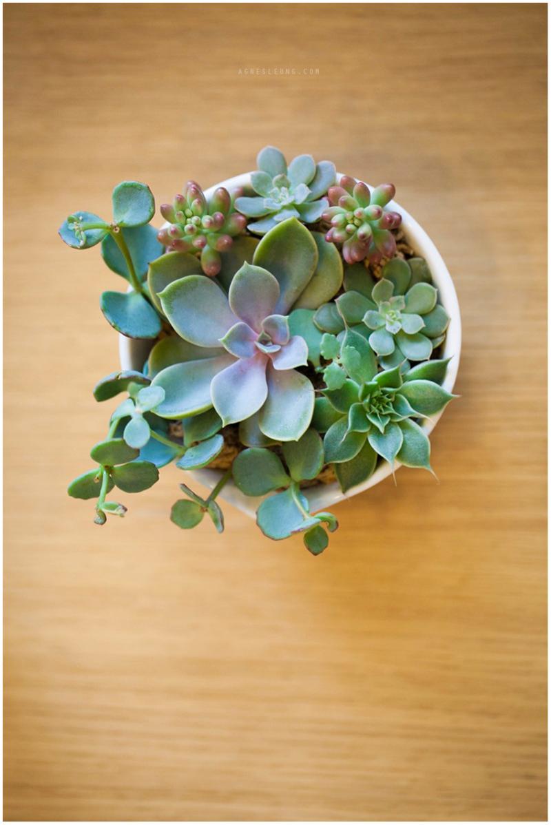 succulent-s13
