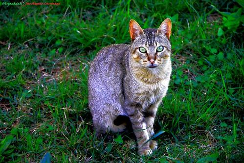 """Animal que es dos veces animal a la vez?  . Gato y  Araña a la vez"""" #Photography"""