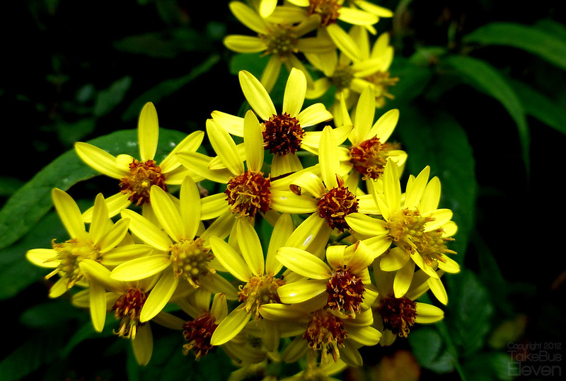 57. yellow flower_flickr
