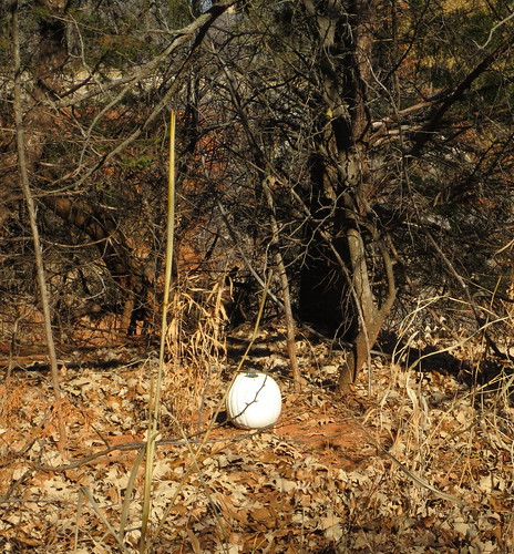 white pumpkin in the woods