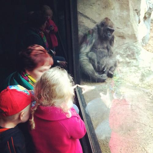 Primates!