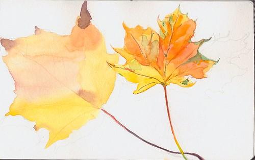 Autumn Leaves watercolour sketch