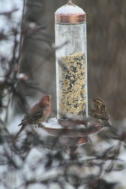 A birdy conversation?