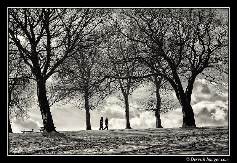 Bramley Park Silhouette