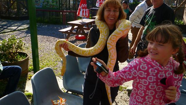 Borth Animalarium, Albino Python
