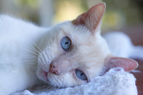 Friday cat photo