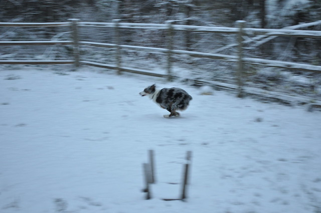 Hamilton's First Snow!