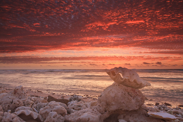 Clam Shell Sunset, Quobba W.A