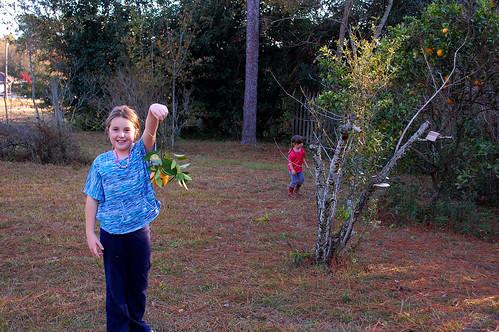 Picking oranges.
