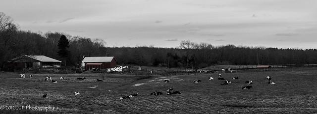 2012_Nov_25_Dairy Farm_004