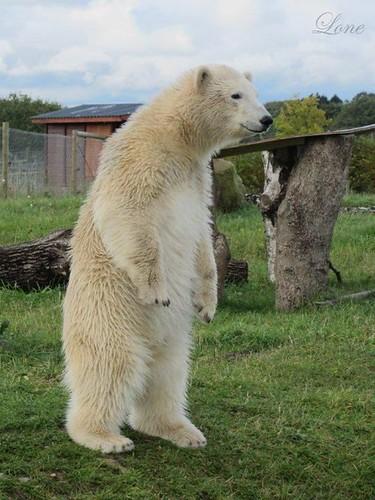 What a wonderful bear!