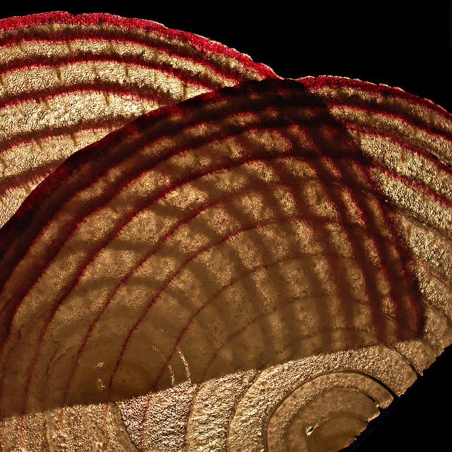 onion abstract (brescia, italy)