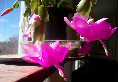tropical cactus 2