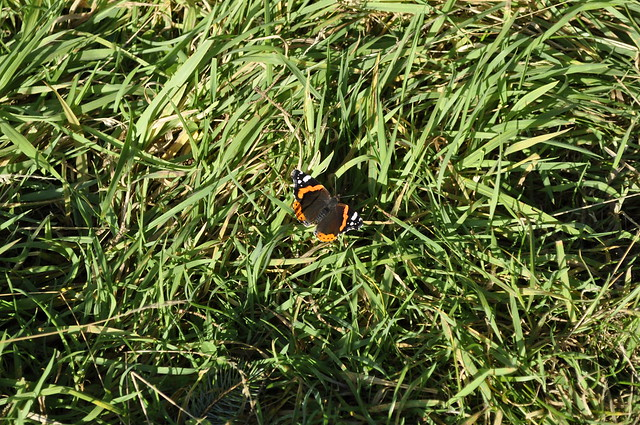 2012-11-10 Scotstown moor 03