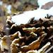 tree fungus with snow