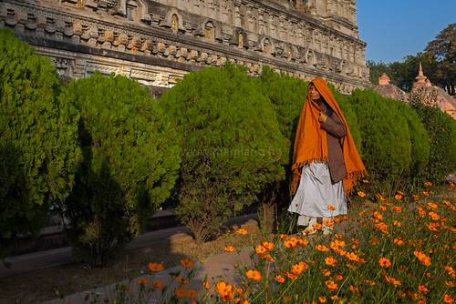 Poppies, Bodhgaya by Marji Lang