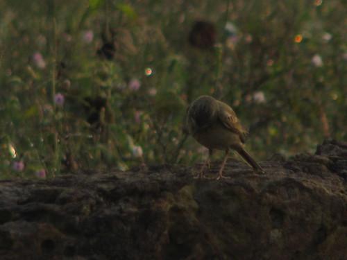 Funny Bird by mdashf
