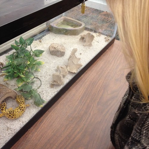 geckos at library