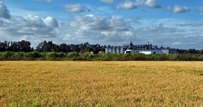 Un silo de grano junto a un arrozal en La Puebla del Río, Sevilla