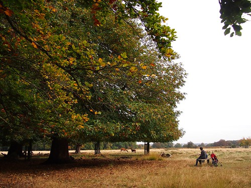 Autumn in England - in Richmond Park watching the deer
