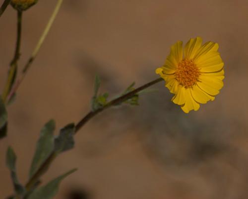 30 Days of Gratitude:  Day 26 -- Flowers