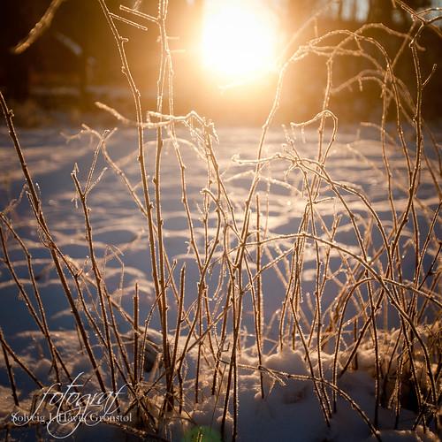 Desember soloppgang by solveiggronstol