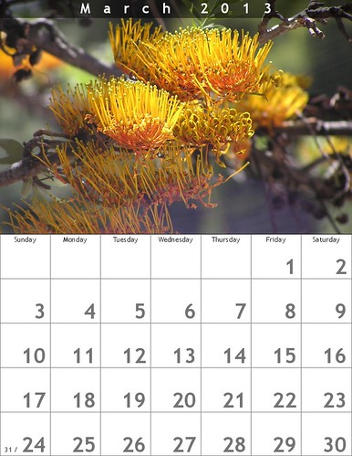 March 2013 Calendar: Australia's Grevillea Robusta in Mexico @bighugelabs #oaxacatoday