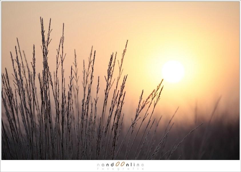 EOS 1Dmk3  (1,3 crop) met 145mm objectief, f/2,8 Het onderwerp in het zonnetje zetten