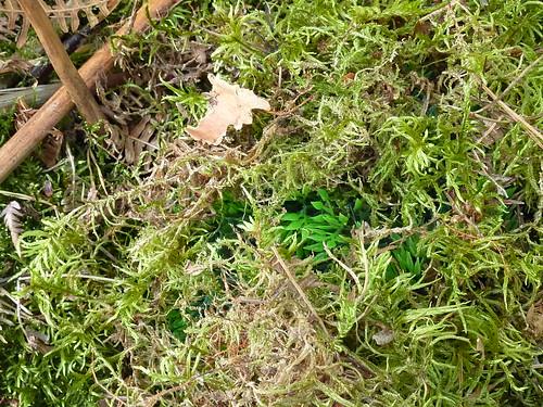 géocache herbe