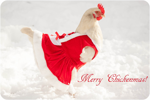 Merry Chickenmas!