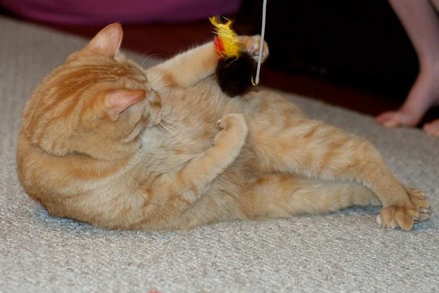 Clinging to Birdie