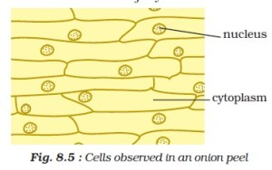 NCERT Class VIII Science Chapter 8 Cell Structure and