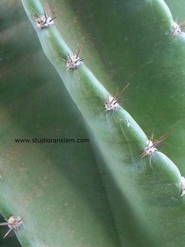 Cactus Textures