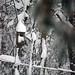 snow on the neighbors bird house