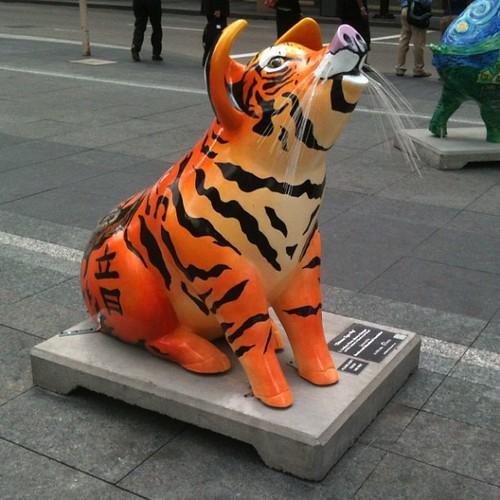 Tiger Pig