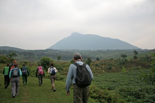 hiking to the gorillas