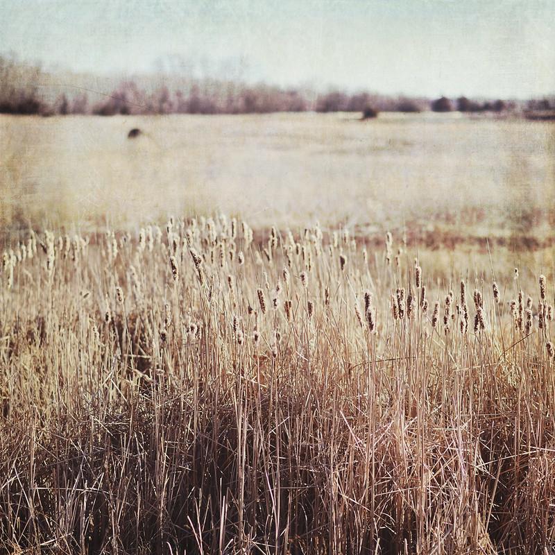 Trina Baker Photography Kansas Photographer