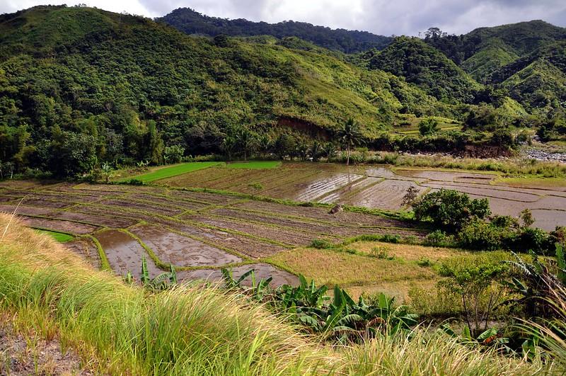 Apayao Rice Paddies