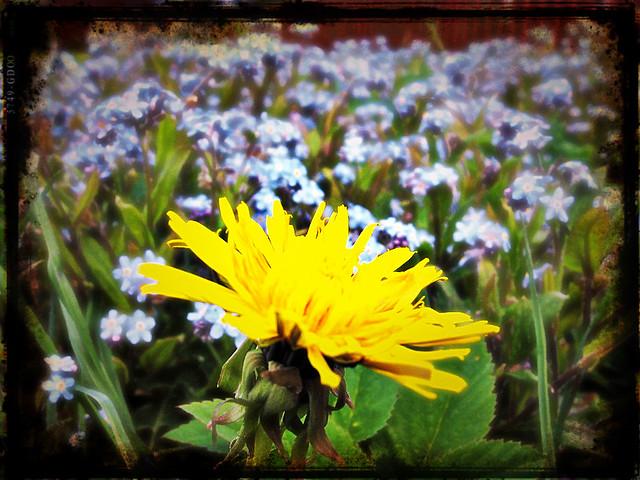 Vårlängtan