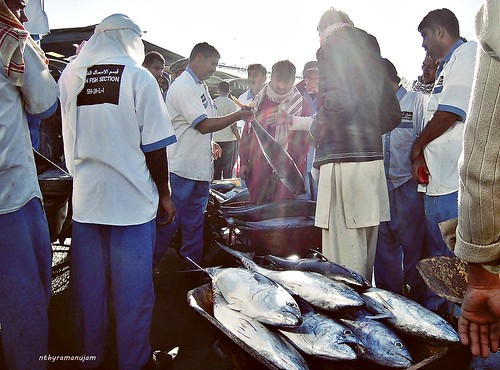 Dubai Fish Market #1 by Str8Sighted.
