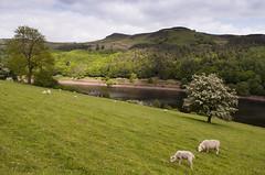 Upper Derwent Valley