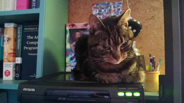 Millie warming herself on my hi-fi.