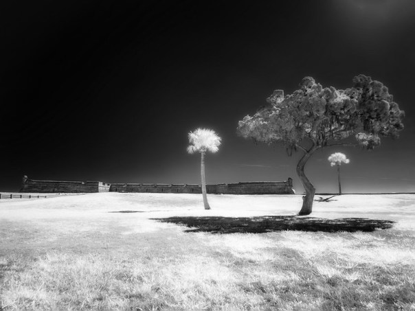 Three trees, their  shadows, and the  Castillo de San Marco