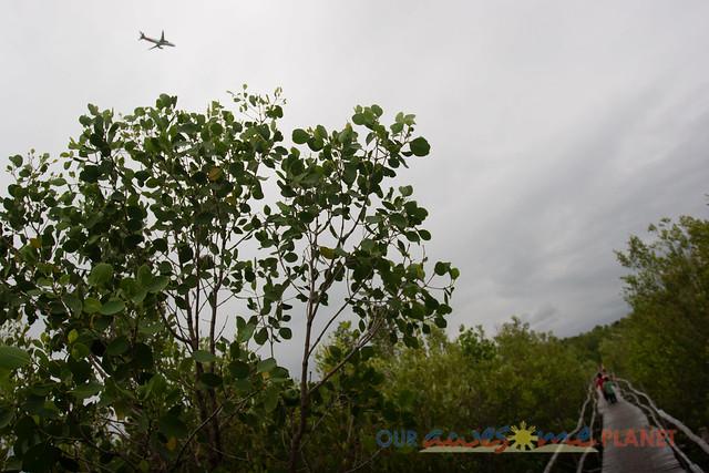 Bakhawan Eco-Park-52.jpg