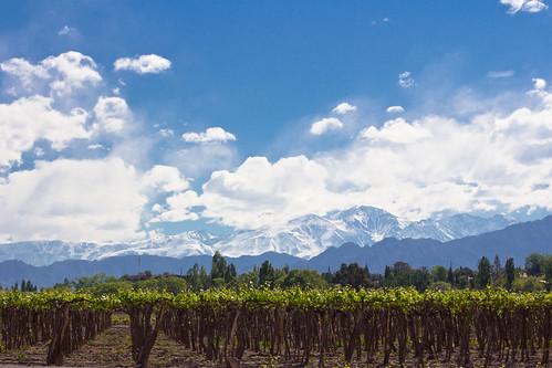Viñedos de la Bodega Nieto Senetiner (Mendoza)
