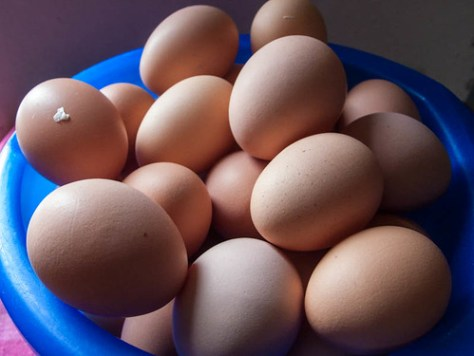Eggs from the last 2 weeks